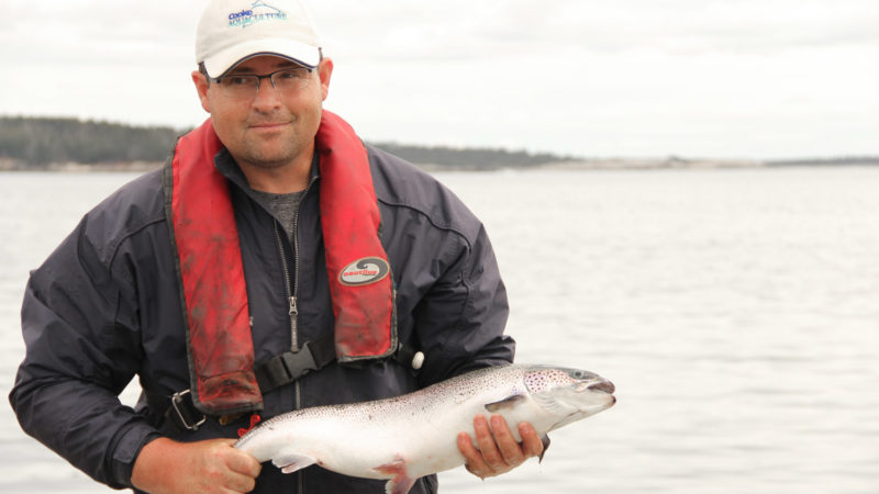 farmed-atlantic-salmon-salmo-salar-harvesting-ocean-people