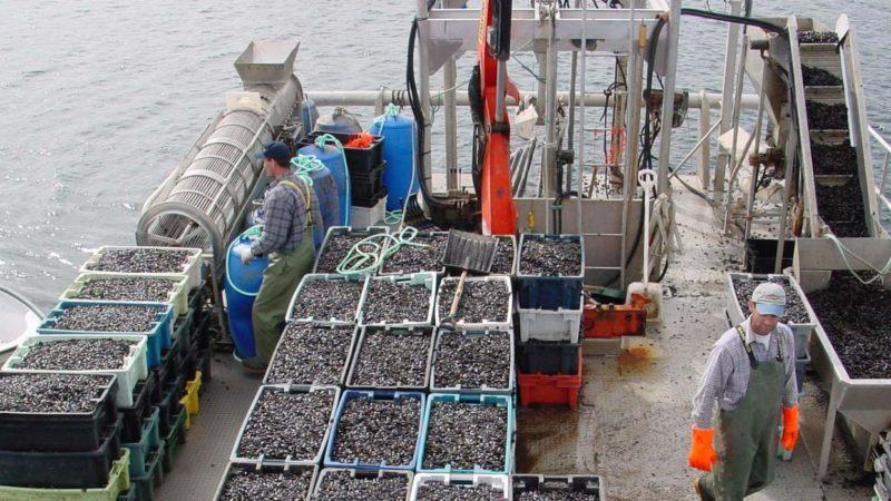farmed-blue-mussels-mytilud-edulis-harvesting-ocean