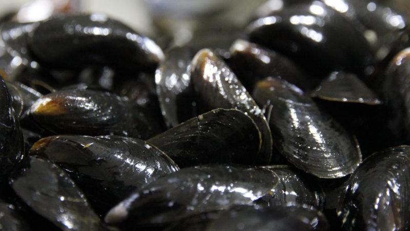 farmed-blue-mussels-mytilud-edulis-processing