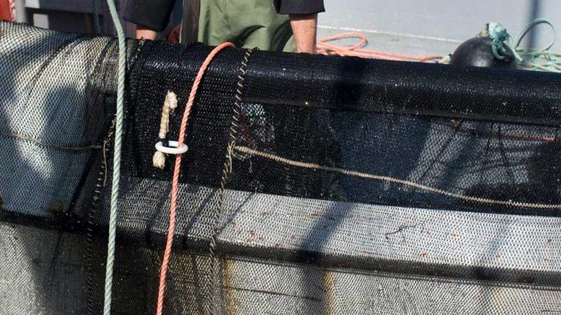 herring-fishing-fisherman-fisherperson-boat-nets-fresh