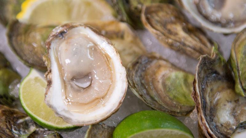 oysters-crassostrea-virginica-half-shell