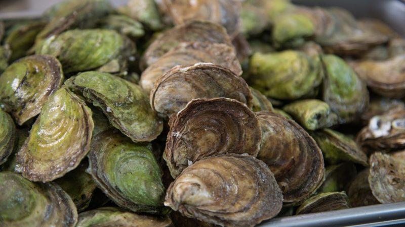 oysters-crassostrea-virginica-whole-raw