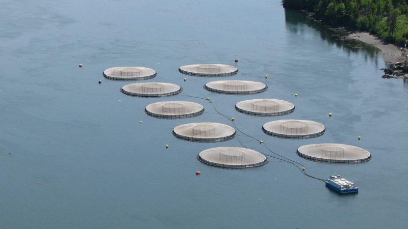 canada-sustainable-salmon-farm
