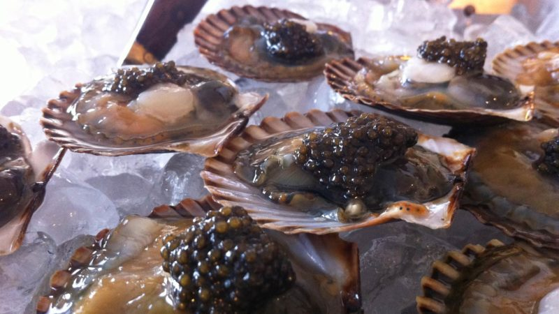scallop-inshell-raw-on-ice