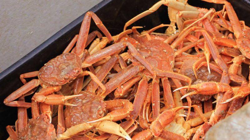 snow-crab-chionoecetes-opilio-raw-whole-fish-pan