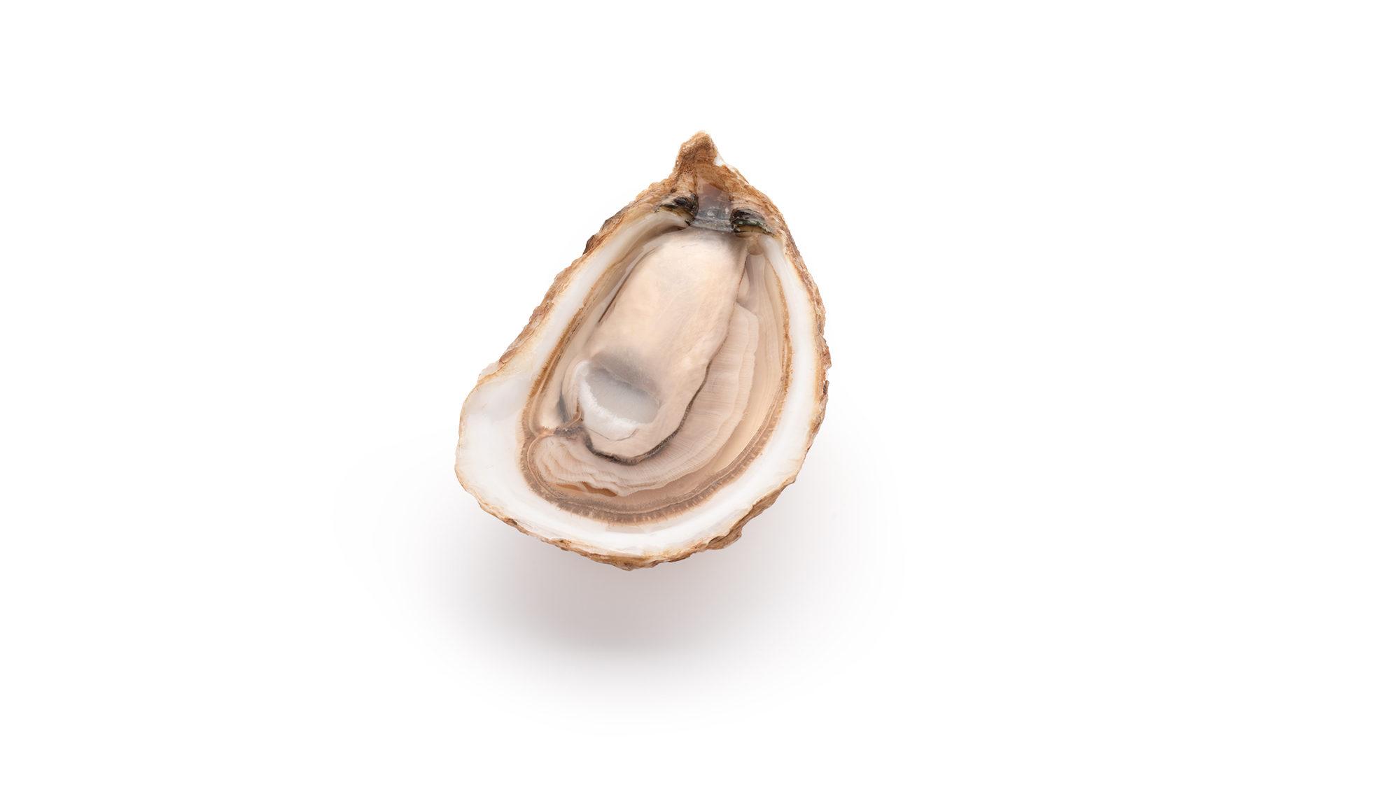 oyster-crassostrea-virginica-product