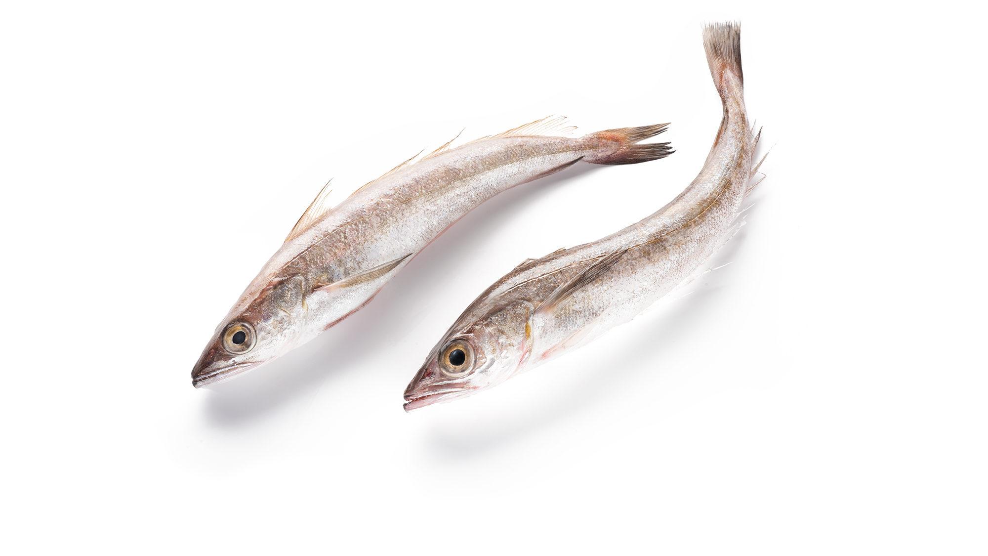 silver-hake-merluccius-bilinearis-product