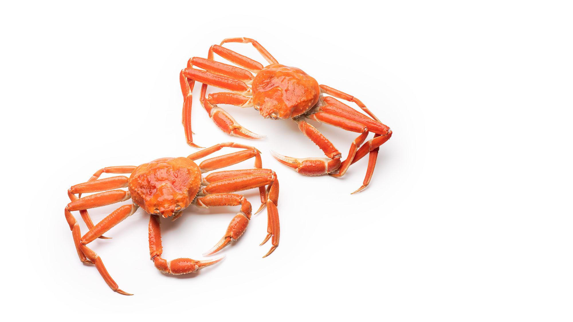 snow-crab-chionoecetes-opilio-product